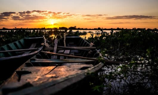 Boats rest among weeds in sunset