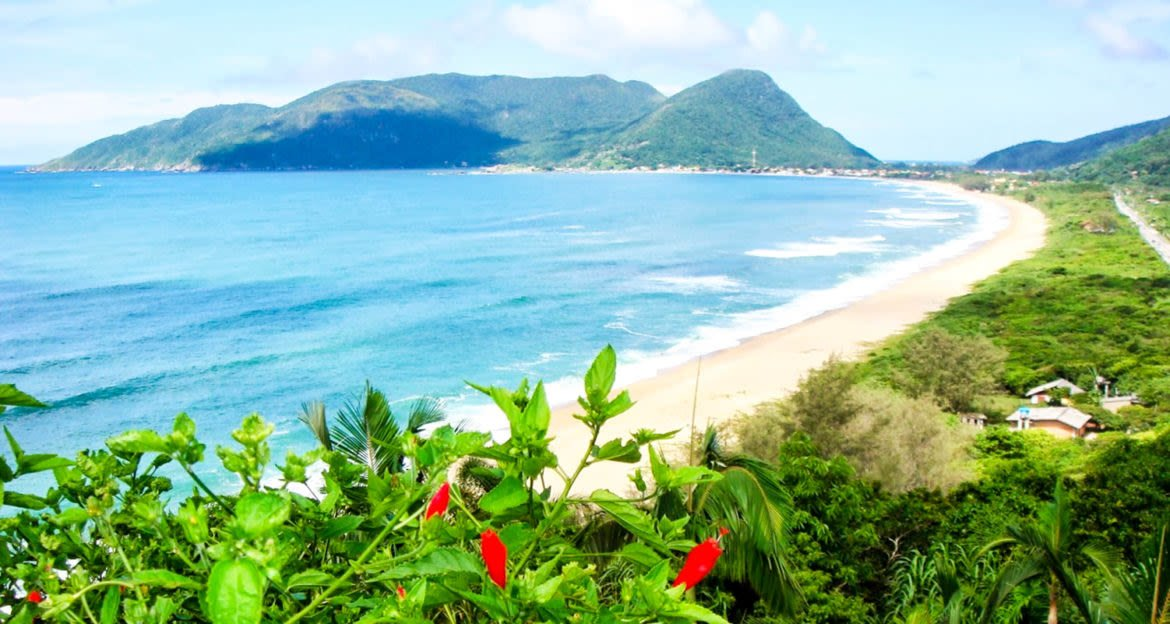 View down Brazil beach with red flowers in foreground