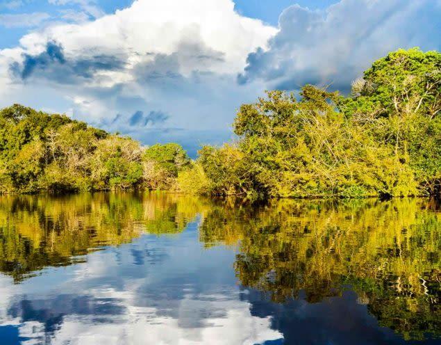 River in the Brazil Amazon