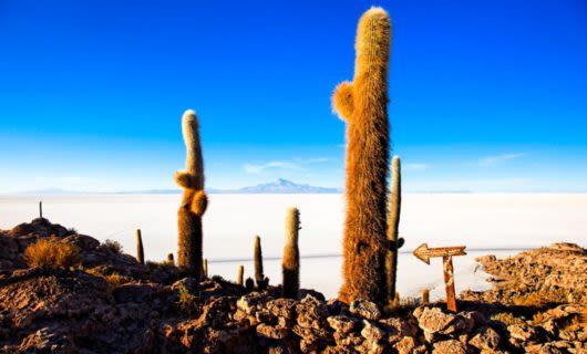 Cacti in the desert