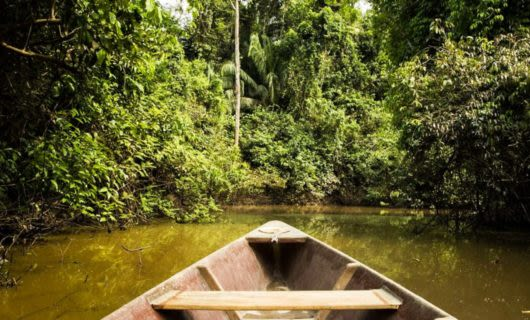 Prow of wooden canoe floating down forest river
