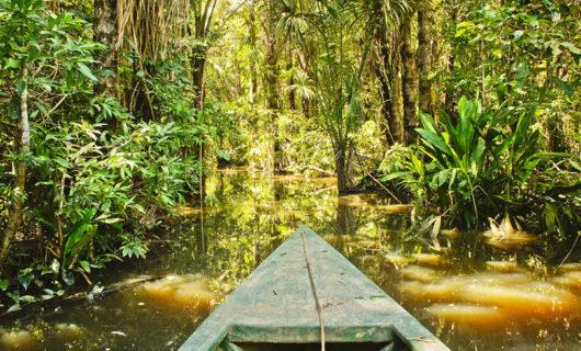 canoe ride through dense jungle river