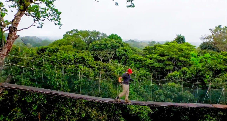 Traveler walks across jungle canopy rope bridge