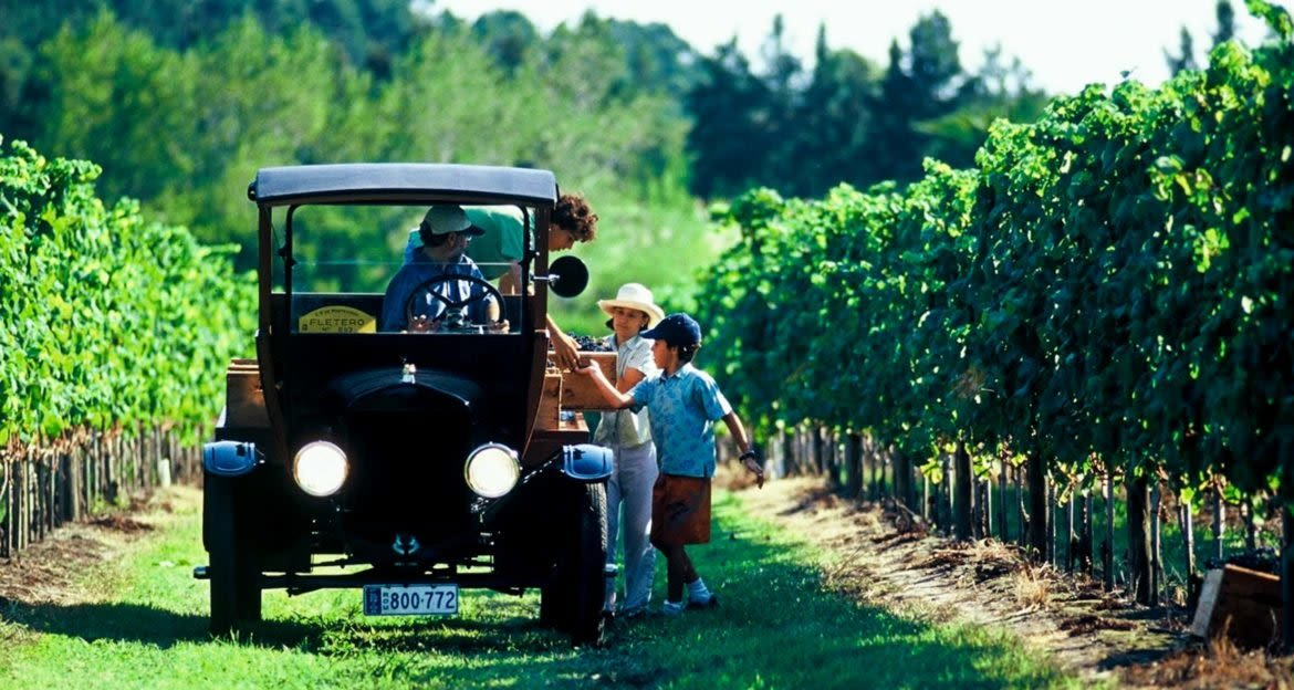 Vintage care drives through row of vineyard