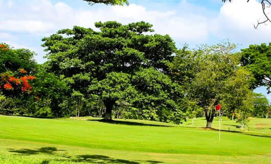 Trees and flags on Cartagena golf green