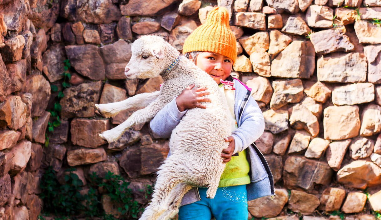 Smiling young child holds sheep