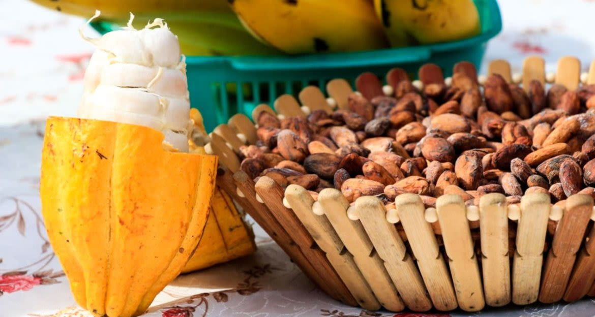 Cocoa beans in wood basket
