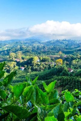 View over coffee plantation in Colombia