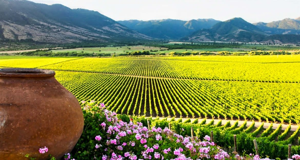 View across Colchagua Valley vineyards