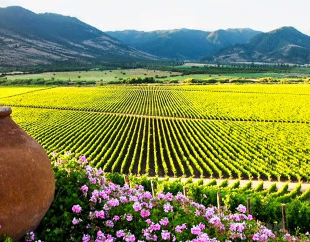 View across Colchagua Valley vineyards