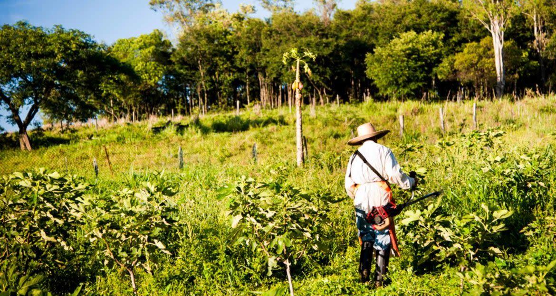 Cropworker in fields of Brazil