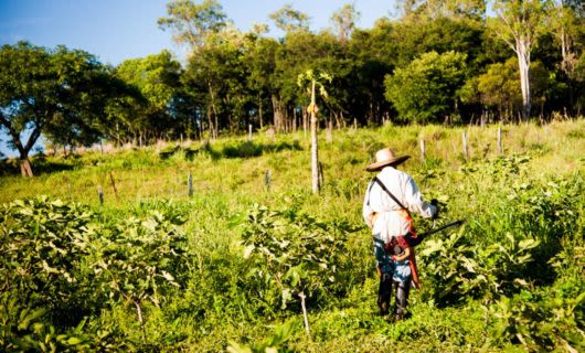 Cropworker in fields of Brazil