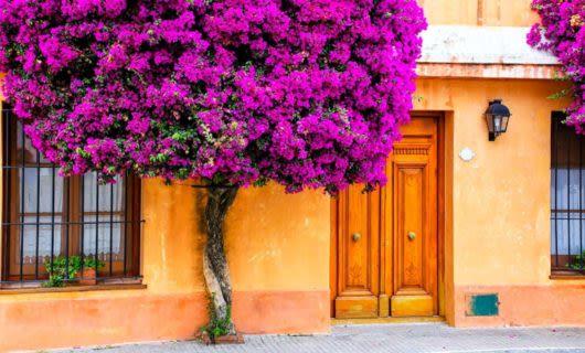 Purple tree outside of double door