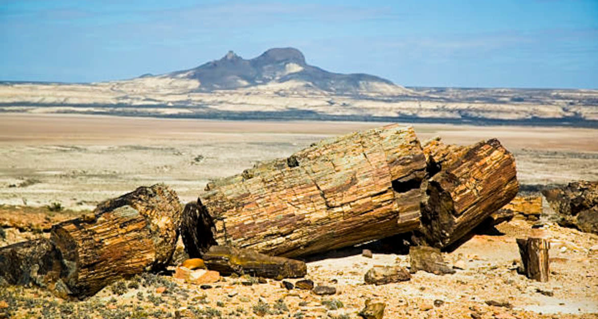 Piece of driftwood in front of desert and mountain