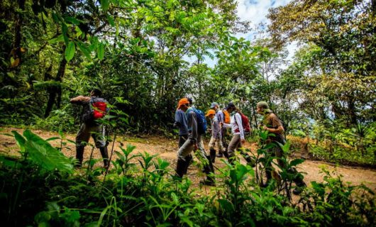 Hiking group climbs trail in Ecuador forest