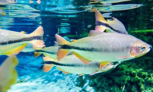 School of fish swim underwater