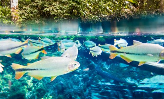 Underwater view of group of fish