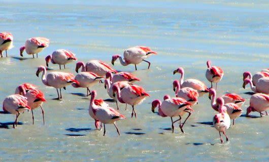 Flock of flamingoes in water