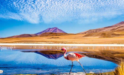 Flamingo walks in front of Bolivia lagoon