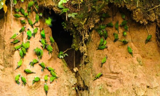 Flock of green birds near cave opening