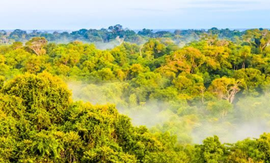Fog rises from Amazon jungle