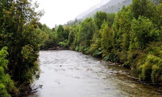 River runs through foggy forest