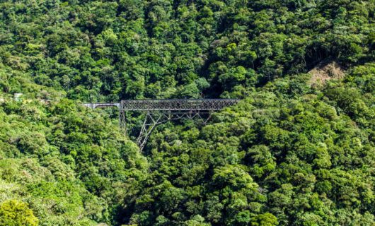 Train bridge runs through thick forest