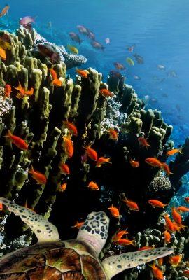 Galapagos Islands Cruises sea turtles swimming near rocks