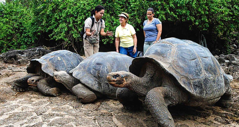 Travelers admire giant tortoises