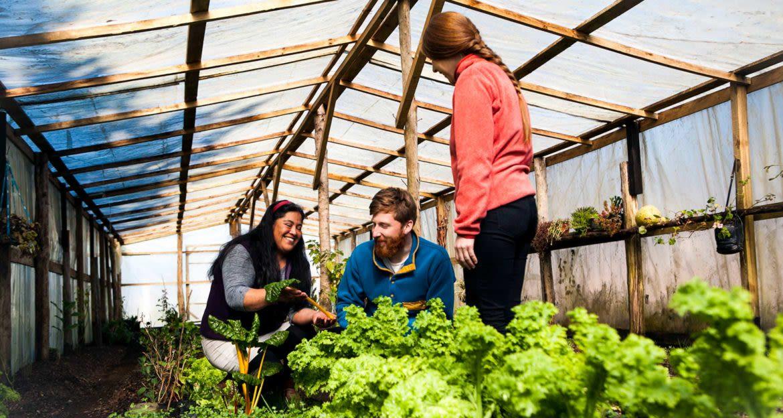 Three people in greenhouse