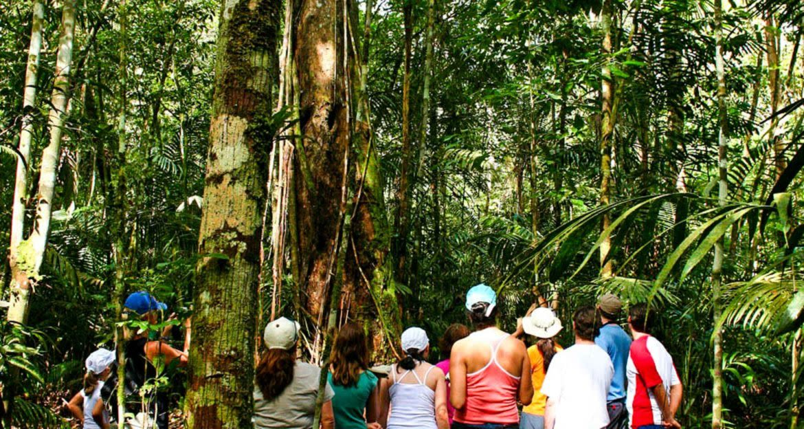 Group of travelers look up at jungle trees