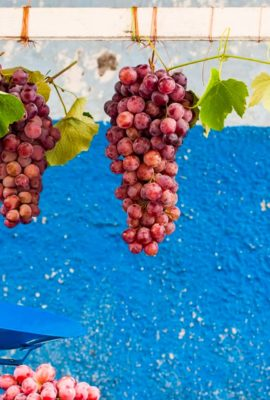 Hanging bunches of grapes in Bolivia