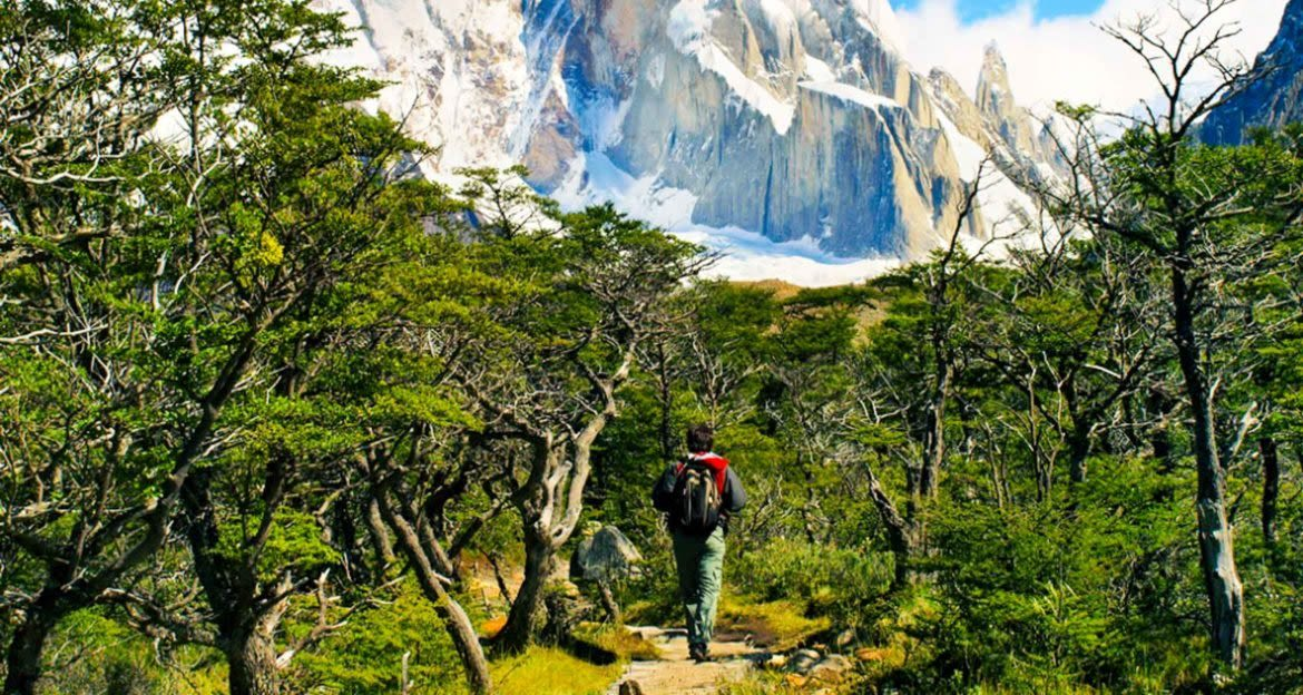 Hiker in forest of Patagonia valley
