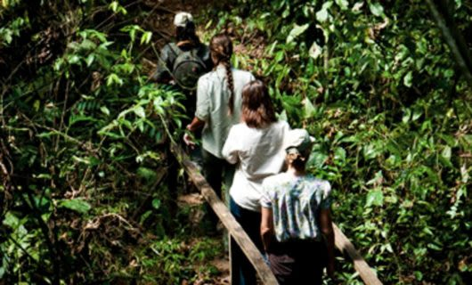 Group of hikers cross wooden bridge on forest trail