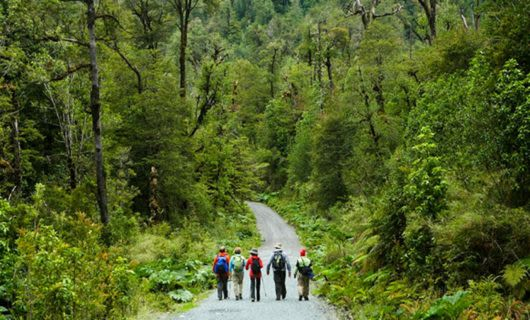 Group of hikers walk down forest road
