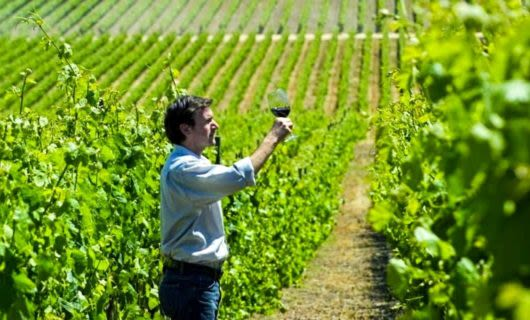 Man holds wine glass up in vineyard