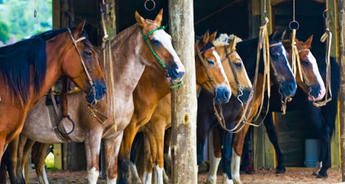 Horses lined up in barn