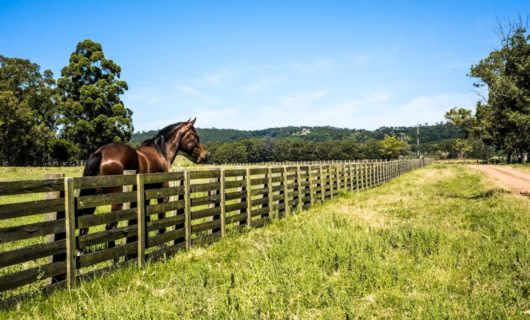 Horse stands behind fence