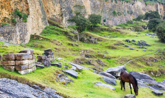 Horse outside ancient Peruvian ruins