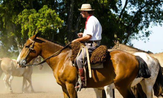 Man sits on horseback
