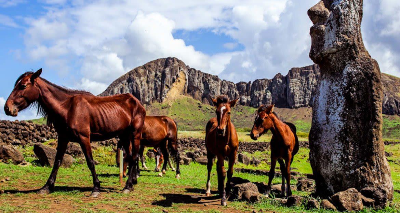 Wild horses on Easter Island