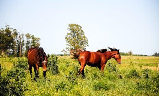Two horses graze in field