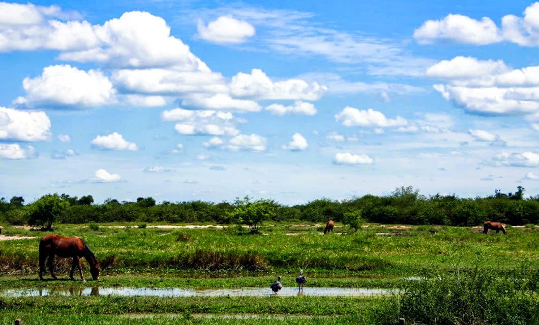 Wide view of field with birds and horses