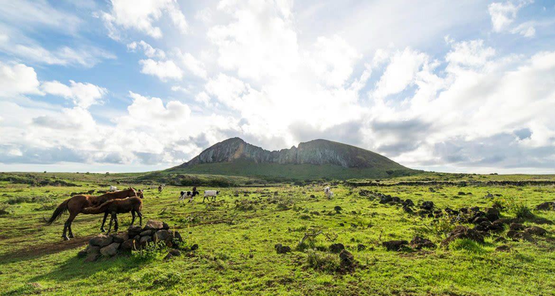 Horses graze in field near mountain
