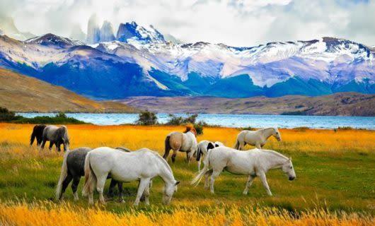 Group of horses graze in field near mountain range