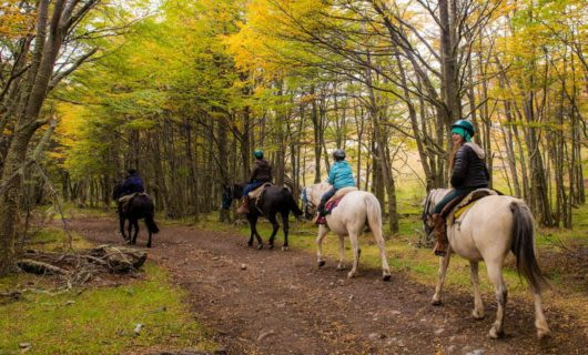 Travelers ride horses down forest trail