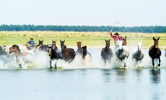 Two men ride a group of horses through shallow water