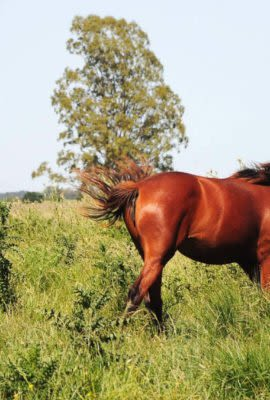 Horses in the Uruguayan countryside
