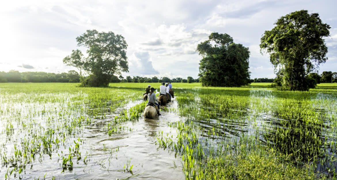 Travelers ride horses through Pantanal wetlands