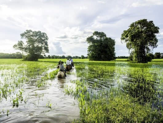 Travelers ride horses through Pantanal wetlands